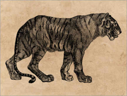 Premium poster  The Tiger - Wunderkammer Collection