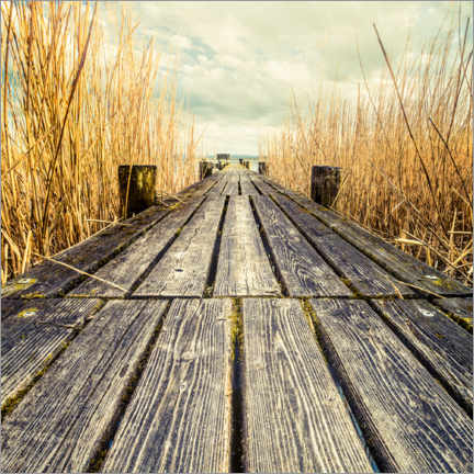 Premium poster  Footbridge in the reeds - Denis Feiner