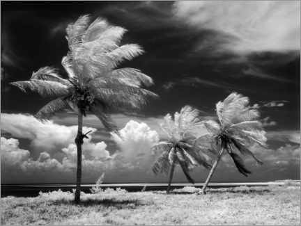 Premium poster Palm trees in the storm