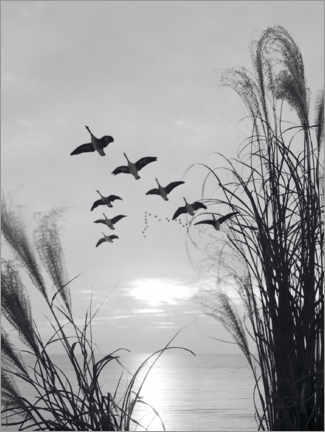 Premium poster Wild geese in formation