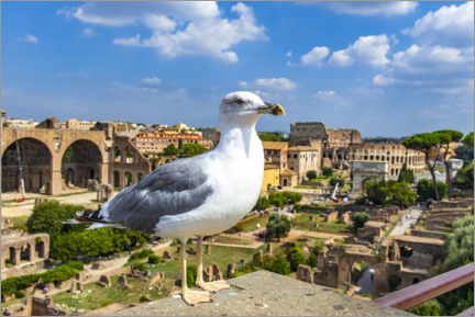 Premium poster Seagull at the Roman Forum, Rome
