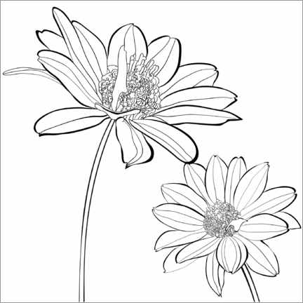 Colouring poster  Echinacea