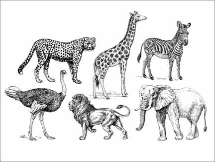 Colouring poster African wildlife