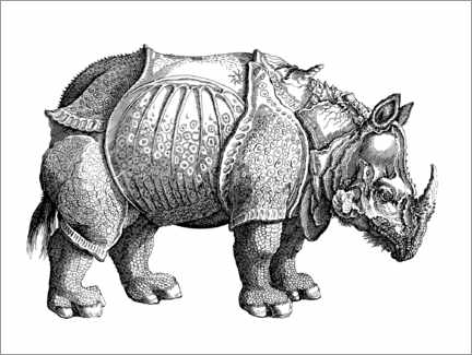Colouring poster  The rhino - Albrecht Dürer