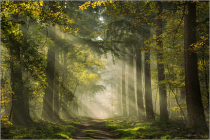 Canvas print  Dutch forest with beautiful sunrays - Martin Podt