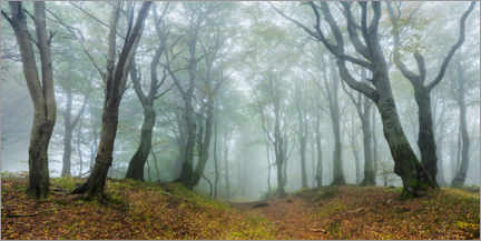 Acrylic print  Mysterious forest in the fog - Andreas Vitting