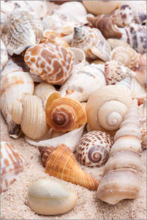 Canvas print  Stacked conch shells - Science Source