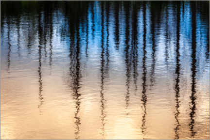 Acrylic print  Tree reflection in the water - Daniel Kieslinger Photo