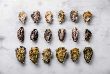 Premium poster Oysters on a light background