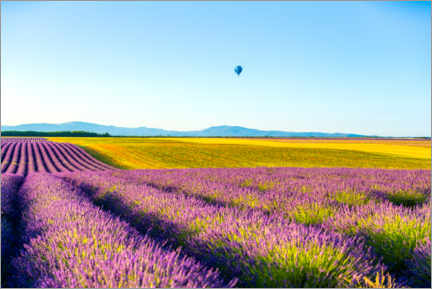 Acrylic print  Lavender fields near Valensole in southern France - Novarc Images