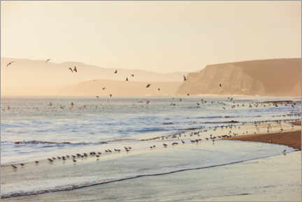 Premium poster Sandpipers and seagulls on the surf
