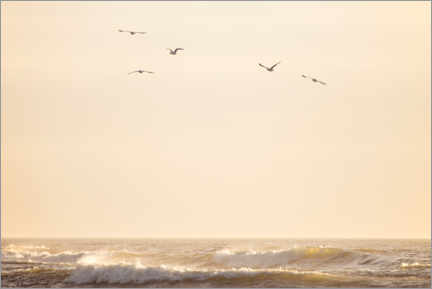 Gallery print  Seagulls fly over the North Sea - Jean Schwarz