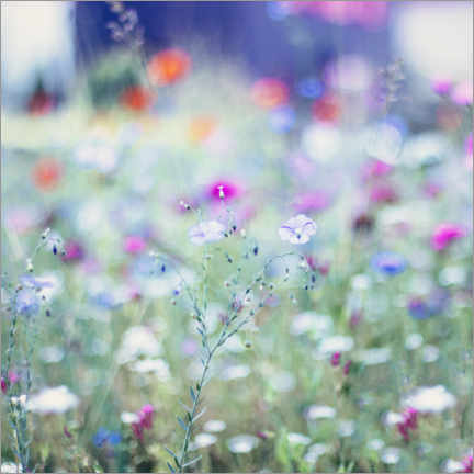 Foam board print  Colourful Flower Meadow in Summer - Nadja Jacke