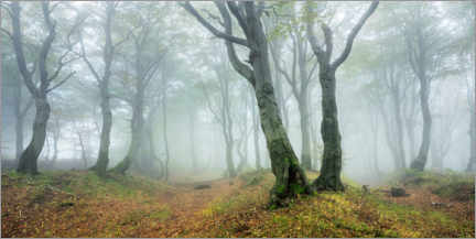 Foam board print  Mysterious forest in the fog - Andreas Vitting