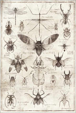 Premium poster  Insects - Mike Koubou