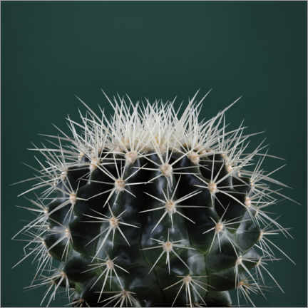 Gallery print  Cacti III - Andre Eichman