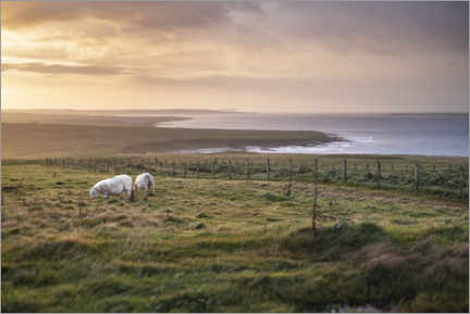 Gallery print  Sheeps by the sea at sunset in Scotland - The Wandering Soul