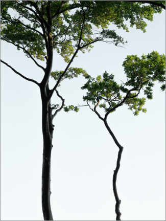 Premium poster Curved trees