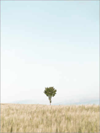 Wood print  Single tree in the field - Lukas Saalfrank