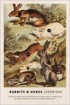 Premium poster Rabbits and hares