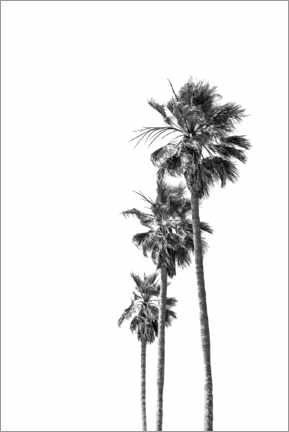 Premium poster Black and white palm trees