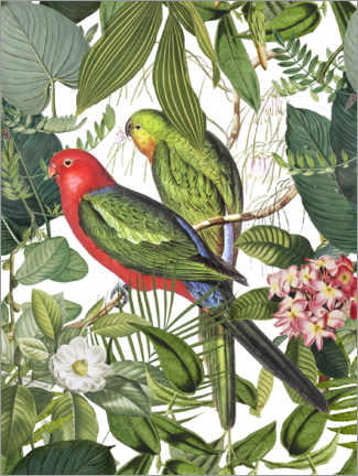 Premium poster  Birds in the tropical paradise - Andrea Haase