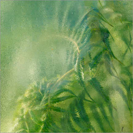 Gallery print  Ferns in the greenhouse - Simon J. Turnbull