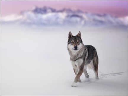 Wall sticker Wolf in the snow