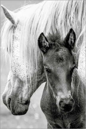 Canvas print  Mother with foal - Jacky Parker