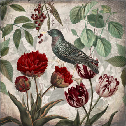 Premium poster Vintage starling with tulips