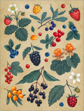 Premium poster Forest Berries