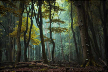Premium poster  A clearing in the dark forest - Martin Podt