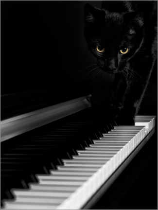 Canvas print  Black cat on a piano - Oleksiy Maksymenko