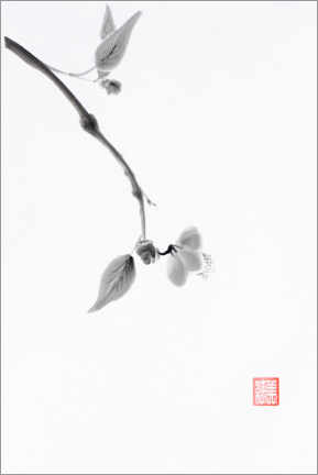 Premium poster Sakura branch with a delicate flower