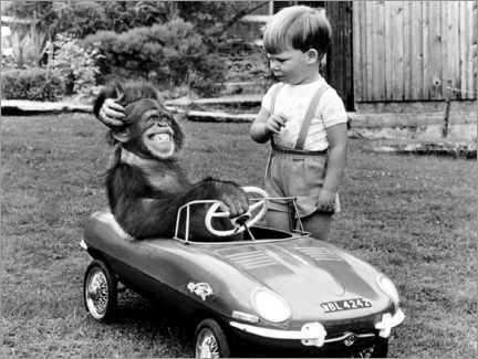 Premium poster  Monkey sits in a child's car - John Drysdale