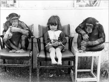 Premium poster  Two chimpanzees and a girl drinking coke - John Drysdale