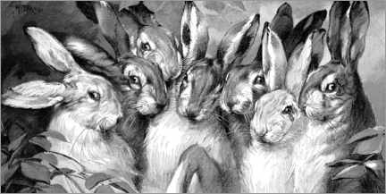 Canvas print  Bunnies black and white - Michael Nitzschke