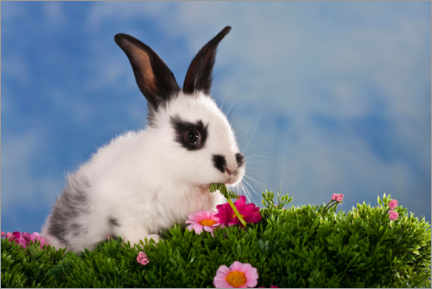 Premium poster Domestic rabbits in flower meadow