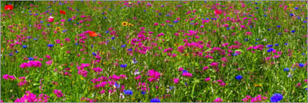Aluminium print  Wildflower meadow - David Chapman