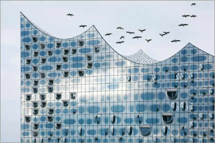 Foam board print  Birds fly over the Elbphilharmonie - Cordelia Ewerth