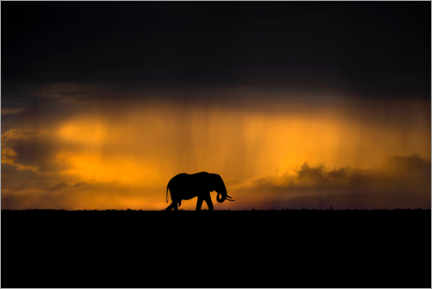 Premium poster Elephant in the rain storm at sunset