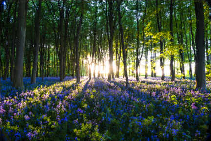 Wall sticker  Bluebell Woods in spring - Matthew Williams-Ellis