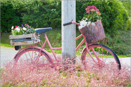 Wood print  Pink bike with flowers - Elmar Krenkel