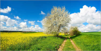 Wall sticker  Rapeseed field and wheat field - AVTG