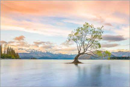 Foam board print  Lonely tree in Wanaka lake - Moritz Wolf