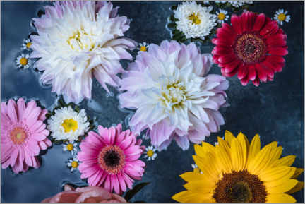 Acrylic print  Different flowers in a water bowl - Olaf Krüger
