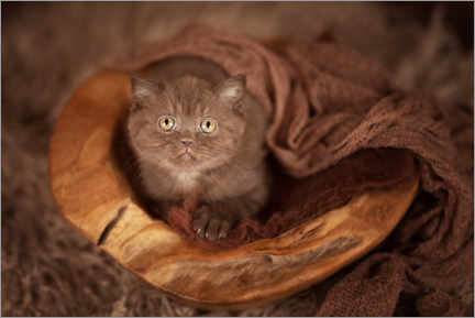 Wood print  Baby cat lies in wooden bowl - Janina Bürger