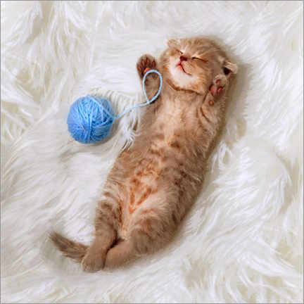 Premium poster Kitten with a ball all of wool