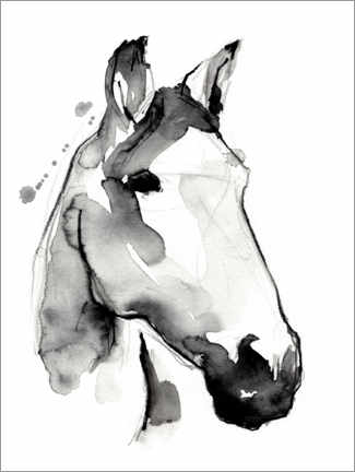 Canvas print  White stallion - Jennifer Paxton Parker
