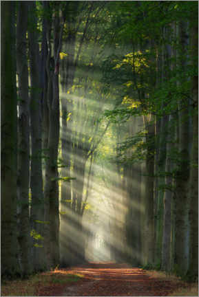 Premium poster  Cathedral - Martin Podt